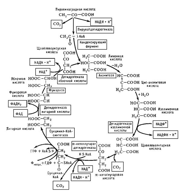 Схема биохимических